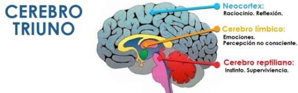 otro cerebro